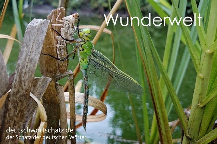 Wunderwelt - die schönsten deutschen Wörter