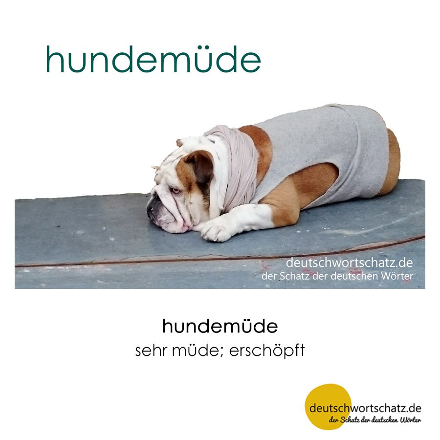 hundemüde - Wortschatz mit Bildern lernen - Deutsch lernen