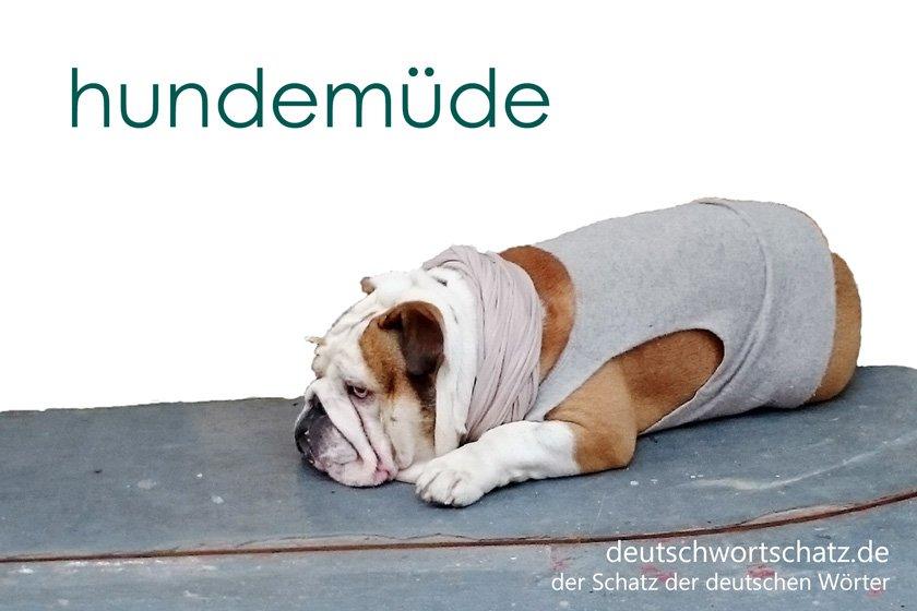 hundemüde - die schönsten deutschen Wörter