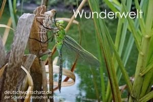Wunderwelt - Deutsch Wortschatz - Wortschatzbilder