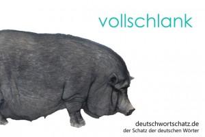 vollschlank - Deutsch Wortschatz - Wortschatzbilder