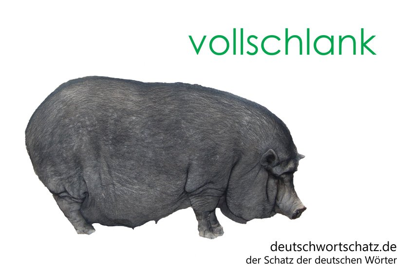 vollschlank - die schönsten deutschen Wörter